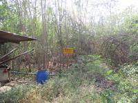 ที่ดินเปล่าหลุดจำนอง ธ.ธนาคารกรุงศรีอยุธยา จังหวัดเพชรบุรี ท่ายาง ปึกเตียน
